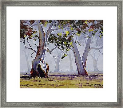 Misty Gums Framed Print