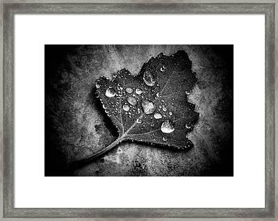 Misty  Framed Print by Karen Scovill