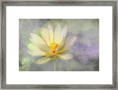 Framed Print featuring the photograph Misty Lotus by Carolyn Dalessandro