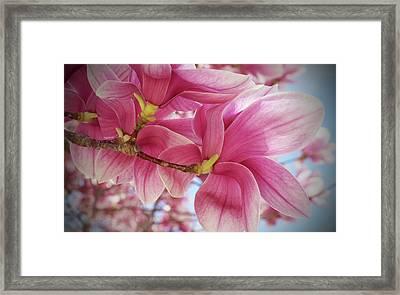 Misty Magnolia Framed Print