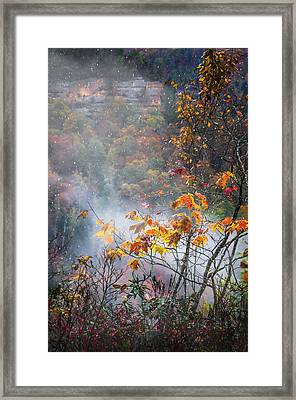 Misty Maple Framed Print by Diana Boyd