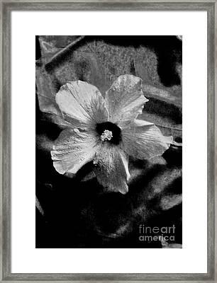 Misty Framed Print by Marsha Heiken