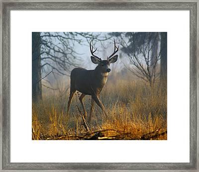 Misty Morning Buck Framed Print by Ben Upham III