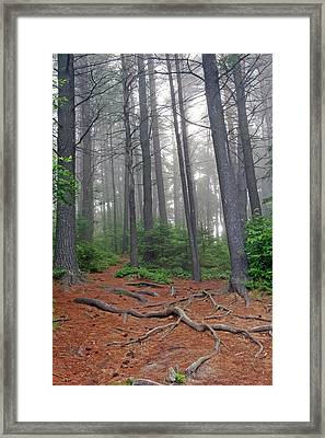 Misty Morning In An Algonquin Forest Framed Print