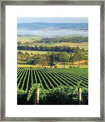 Misty Morning In Yarra Valley Vineyards Near Healesville, Victoria, Australia Framed Print by Peter Walton Photography