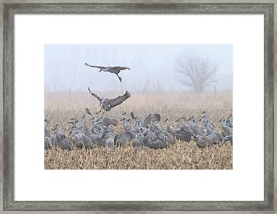 Misty Morning Nebraska Landing Framed Print