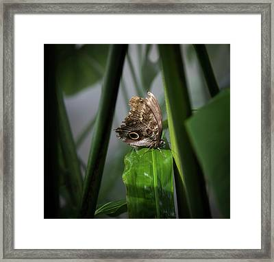 Framed Print featuring the photograph Misty Morning Owl by Karen Wiles