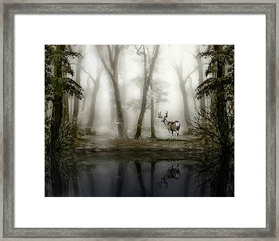 Misty Morning Reflections Framed Print by Diane Schuster