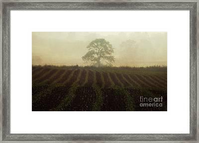 Misty Morning Framed Print by Robert Brown