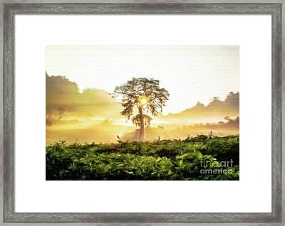 Misty Morning Sunshine Framed Print