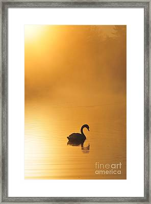 Misty Morning Swim Framed Print