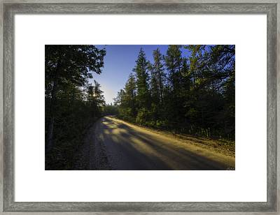 Misty Morning Walk Through The Woods Framed Print