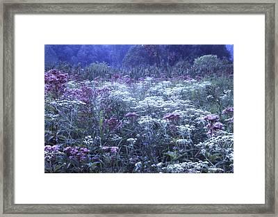 Misty Morning Wildflowers 3 Framed Print