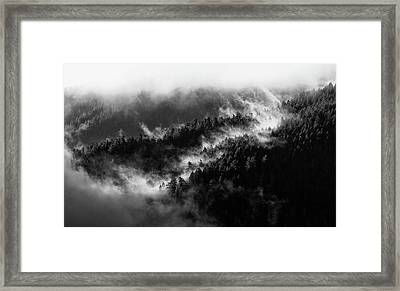 Framed Print featuring the photograph Misty Mountain Pines by Michael Hope