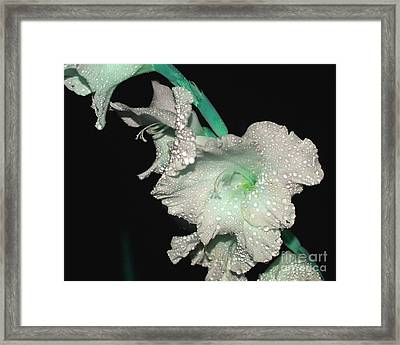 Misty Petals Framed Print by Debbie May