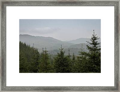 Misty Pine Forests Framed Print
