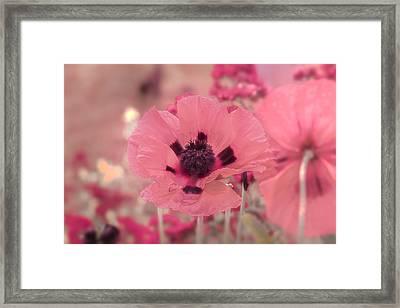 Misty Pink Framed Print