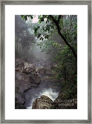Misty Rainforest El Yunque Mirror Image Framed Print by Thomas R Fletcher