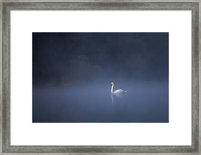 Framed Print featuring the photograph Misty River Swan by Davor Zerjav
