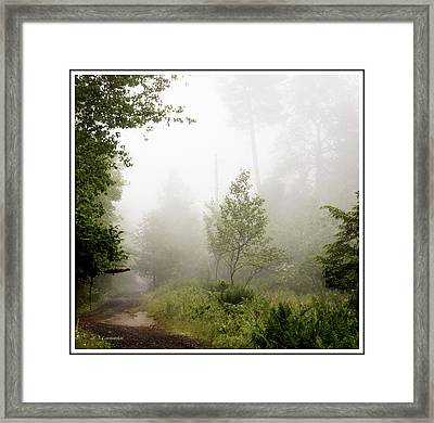 Misty Road At Forest Edge, Pocono Mountains, Pennsylvania Framed Print