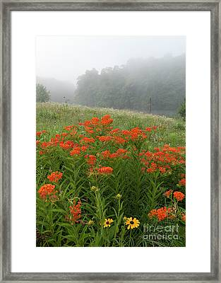 Misty Summer Morning - D010124 Framed Print by Daniel Dempster