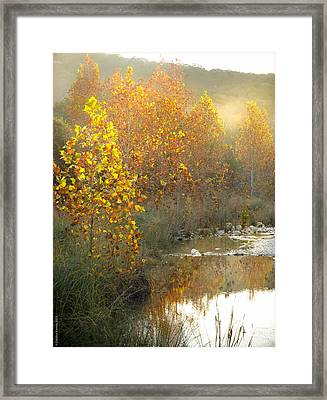 Misty Sunrise At Lost Maples State Park Framed Print by Debbie Karnes