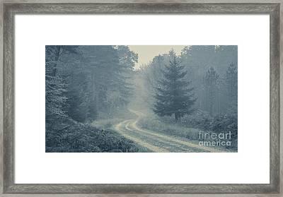 Misty Track New Forest Framed Print