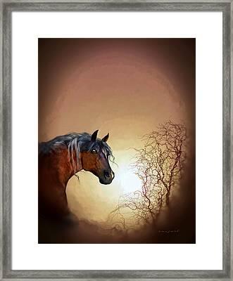 Misty Framed Print by Valerie Anne Kelly