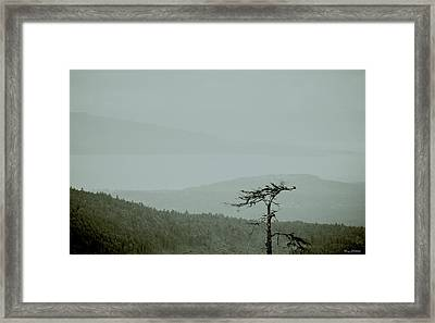 Misty View Framed Print