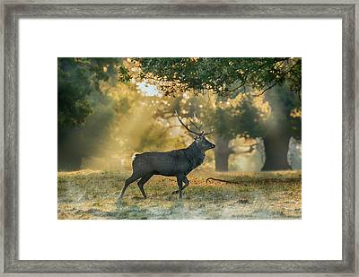 Framed Print featuring the photograph Misty Walk by Scott Carruthers