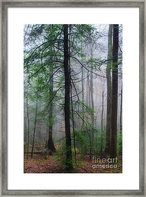Framed Print featuring the photograph Misty Winter Forest by Thomas R Fletcher