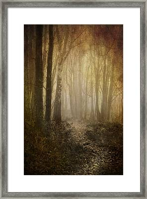 Misty Woodland Path Framed Print