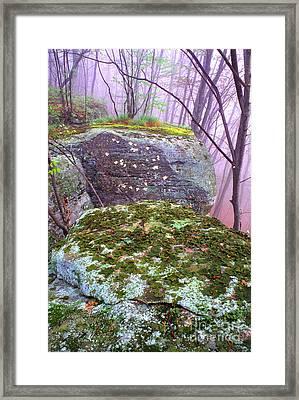 Misty Woodland Scenic Framed Print by Thomas R Fletcher