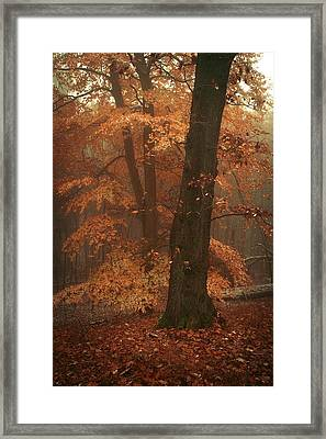 Misty Woods Framed Print