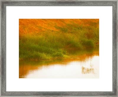 Misty Yellow Hue -lone Jacana Framed Print