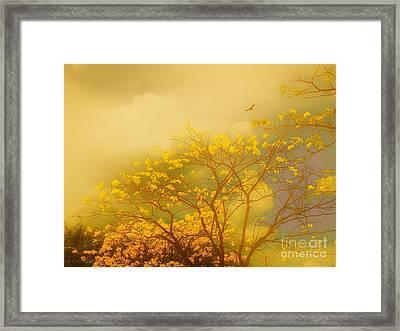Misty Yellow Hue -poui Framed Print
