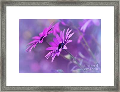 Misty Young Daisies By Kaye Menner Framed Print by Kaye Menner