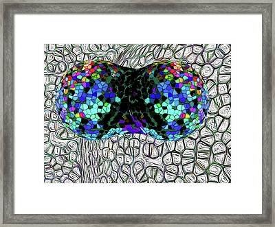 Mitosis Between Consenting Cells Framed Print by Bruce Iorio