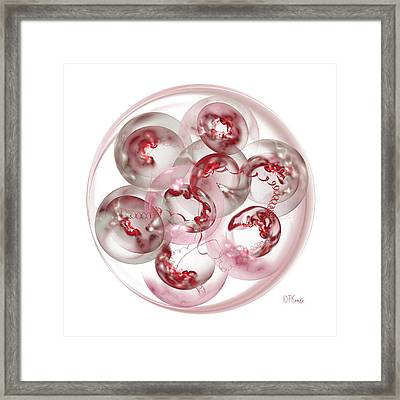 Mitosis On White Framed Print