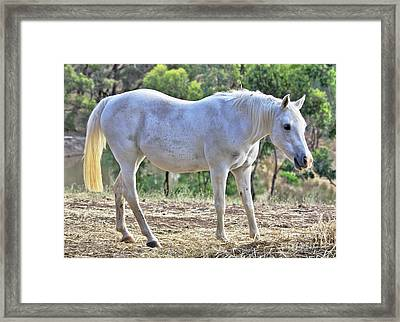 Framed Print featuring the photograph Mitzy by Stephen Mitchell