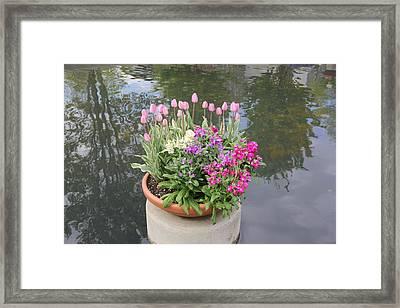 Mixed Flower Planter Framed Print