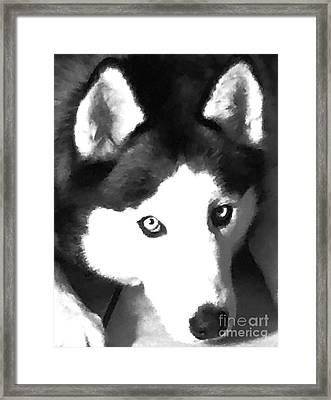 Mixed Media Expressive Siberian Husky A40417 Framed Print by Mas Art Studio