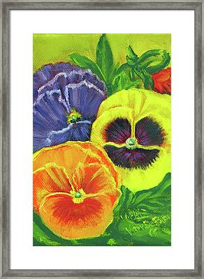 Mixed Pansy  Framed Print