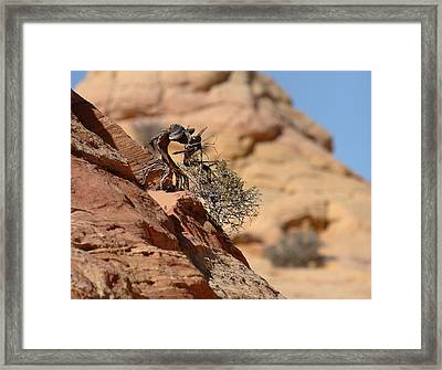 Framed Print featuring the photograph Miyagi by David Andersen