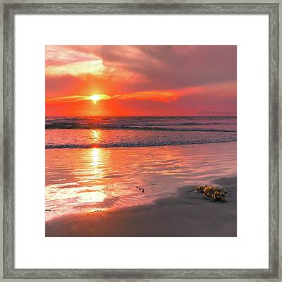 Mn0359 Framed Print by Mikes Nature