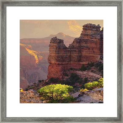 Mn1278 Framed Print by Mikes Nature
