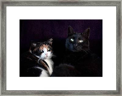Framed Print featuring the photograph Mochi And Stinky by Laura Melis