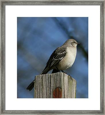 Mocking Bird Framed Print