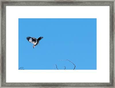 Mockingbird Down Framed Print