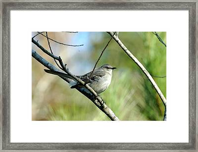 Mockingbird In Green Framed Print by Teresa Blanton